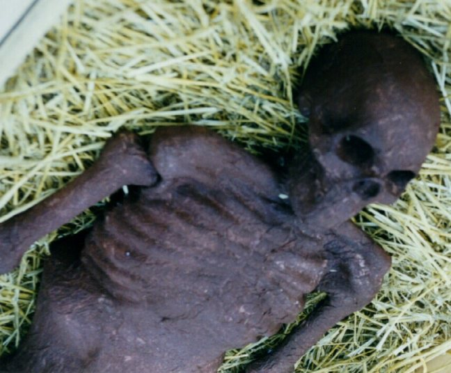corpse1.jpg - 71838 Bytes