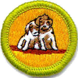 merit badge counselors in the troop